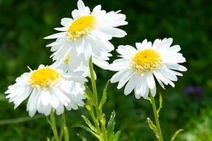 Ochrona roślin w naszym ogrodzie