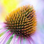 Nawożenie i pielęgnacja roślin