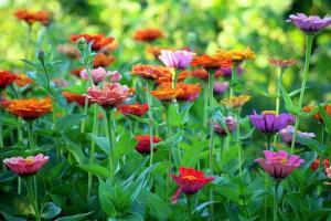 Nawożenie roślin ogrodowych