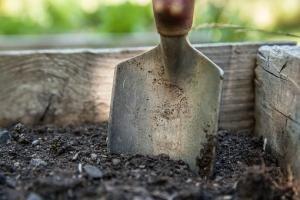 Niewymagający ogród, dla każdego