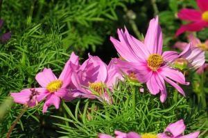 Jakie kwiaty w ogrodzie?