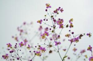 Co dają nam kwiaty?
