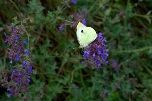 Stworzenie idealnego ogrodu