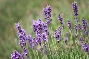 Alergie na kwiaty